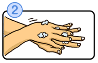 手の甲を洗うイラスト