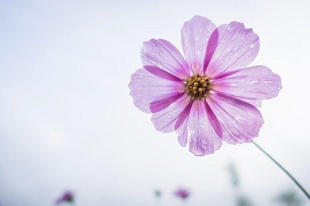 まとめ:勇気の花がひらくとき感想ネタバレあり